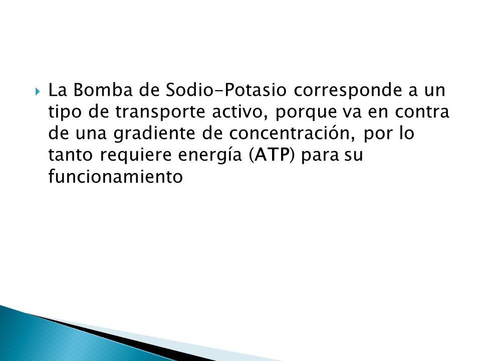 La Bomba de Sodio-Potasio corresponde a un tipo de transporte activo, porque va en contra de una gradiente de concentración, por lo tanto requiere ene