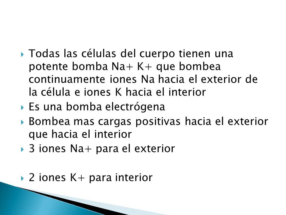 Todas las células del cuerpo tienen una potente bomba Na+ K+ que bombea continuamente iones Na hacia el exterior de la célula e iones K hacia el inter