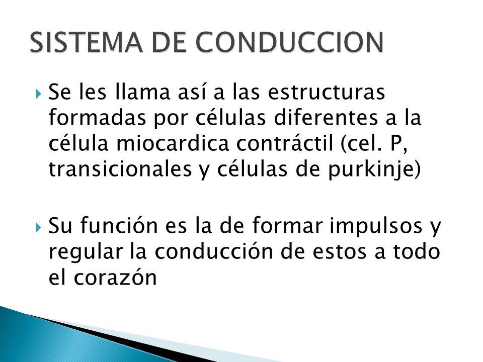 Se les llama así a las estructuras formadas por células diferentes a la célula miocardica contráctil (cel. P, transicionales y células de purkinje) Su