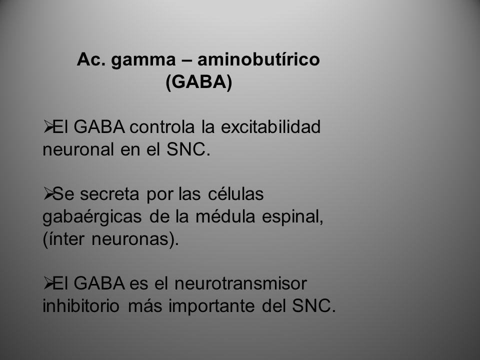 Ac. gamma – aminobutírico (GABA) El GABA controla la excitabilidad neuronal en el SNC. Se secreta por las células gabaérgicas de la médula espinal, (í