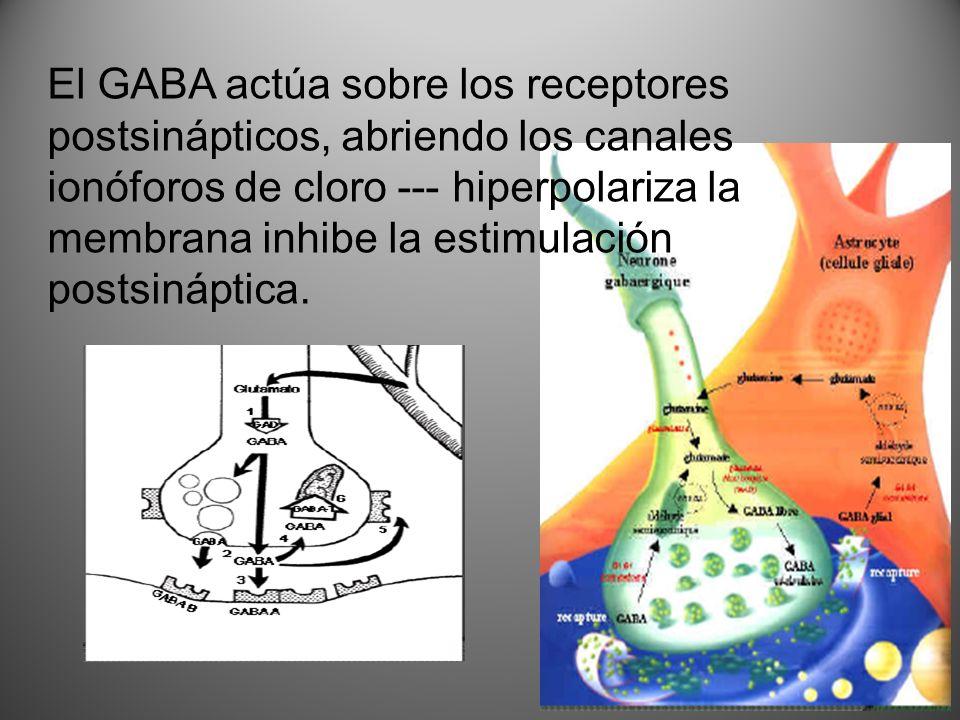 El GABA actúa sobre los receptores postsinápticos, abriendo los canales ionóforos de cloro --- hiperpolariza la membrana inhibe la estimulación postsi