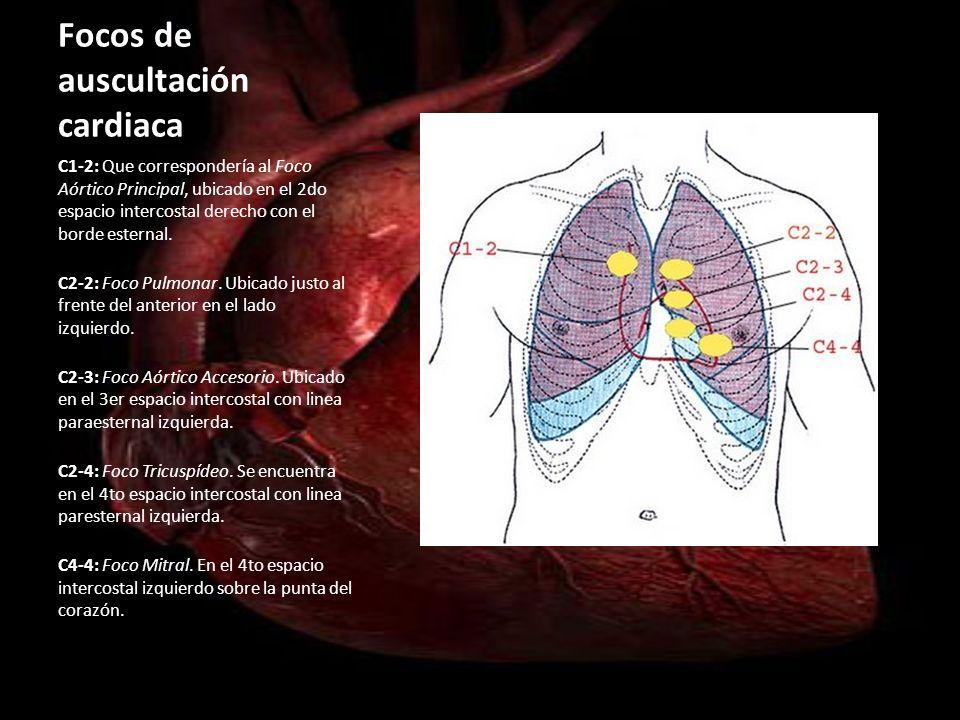 Focos de auscultación cardiaca C1-2: Que correspondería al Foco Aórtico Principal, ubicado en el 2do espacio intercostal derecho con el borde esternal