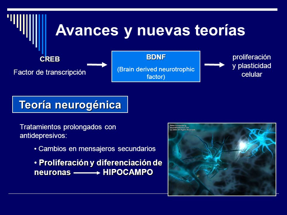 Avances y nuevas teorías CREB Factor de transcripción BDNF (Brain derived neurotrophic factor) proliferación y plasticidad celular Teoría neurogénica Tratamientos prolongados con antidepresivos: Cambios en mensajeros secundarios Proliferación y diferenciación de neuronas HIPOCAMPO