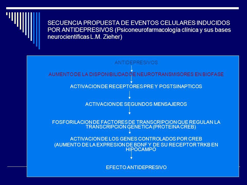 SECUENCIA PROPUESTA DE EVENTOS CELULARES INDUCIDOS POR ANTIDEPRESIVOS (Psiconeurofarmacología clínica y sus bases neurocientíficas L.M.