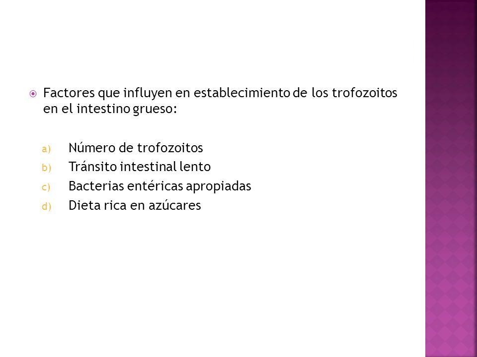Factores que influyen en establecimiento de los trofozoitos en el intestino grueso: a) Número de trofozoitos b) Tránsito intestinal lento c) Bacterias