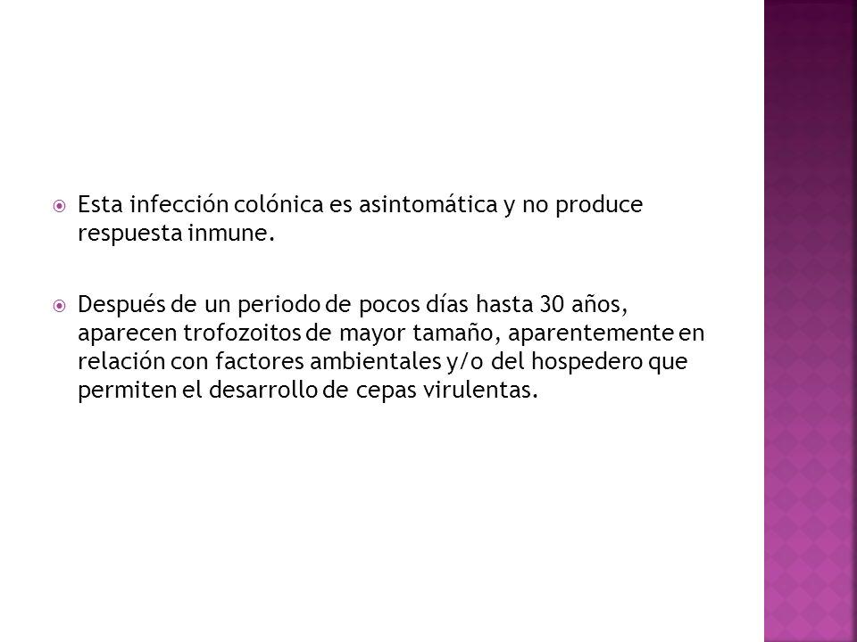 Esta infección colónica es asintomática y no produce respuesta inmune. Después de un periodo de pocos días hasta 30 años, aparecen trofozoitos de mayo