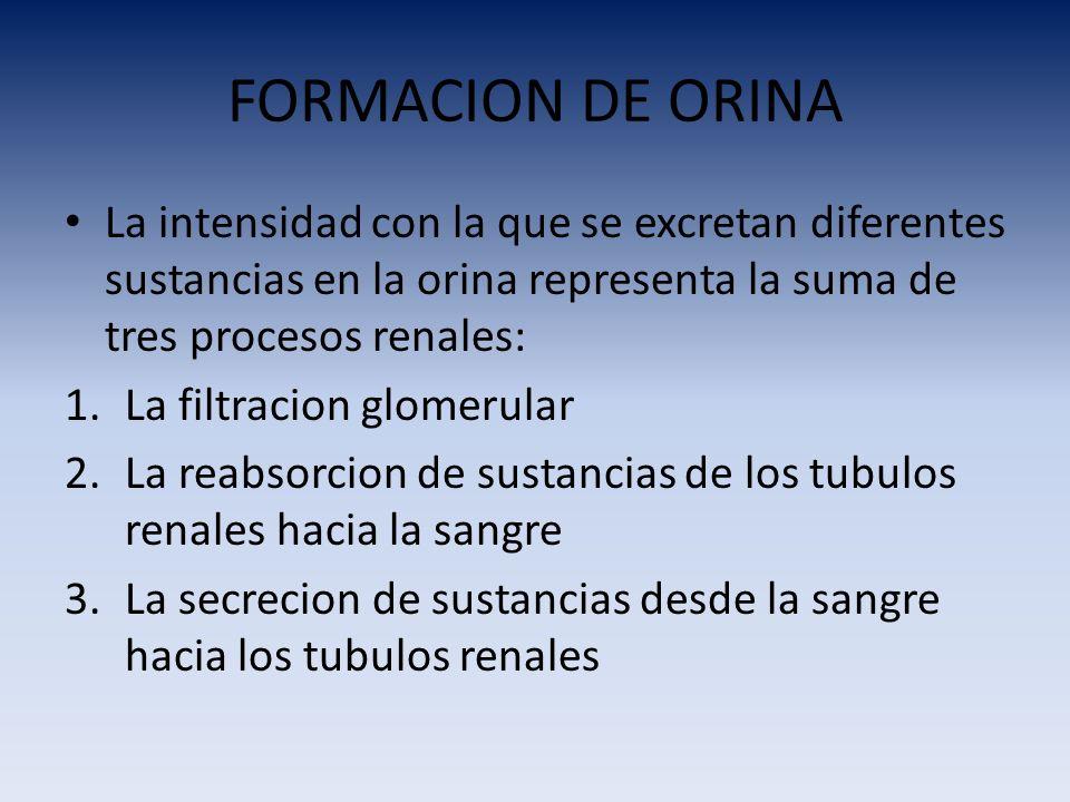 FORMACION DE ORINA La intensidad con la que se excretan diferentes sustancias en la orina representa la suma de tres procesos renales: 1.La filtracion