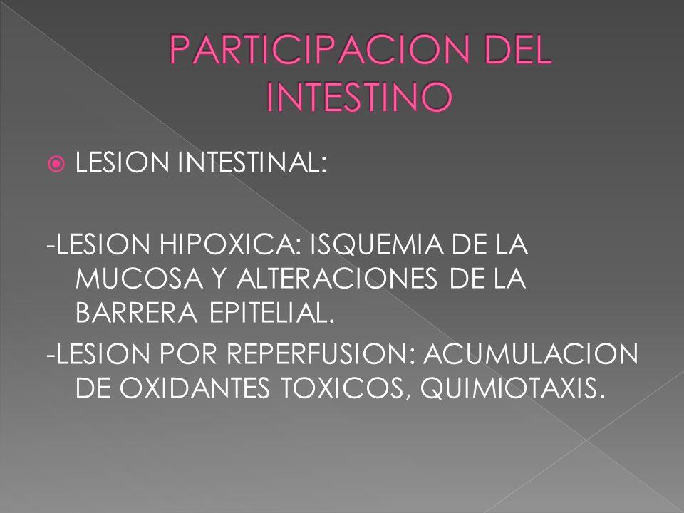 LESION INTESTINAL: -LESION HIPOXICA: ISQUEMIA DE LA MUCOSA Y ALTERACIONES DE LA BARRERA EPITELIAL. -LESION POR REPERFUSION: ACUMULACION DE OXIDANTES T