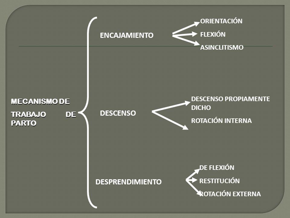 MECANISMO DE TRABAJO DE PARTO ENCAJAMIENTO DESCENSO DESPRENDIMIENTO ORIENTACIÓN FLEXIÓN ASINCLITISMO DESCENSO PROPIAMENTE DICHO ROTACIÓN INTERNA DE FLEXIÓN RESTITUCIÓN ROTACIÓN EXTERNA