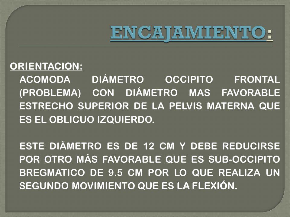 ORIENTACION: ACOMODA DIÁMETRO OCCIPITO FRONTAL (PROBLEMA) CON DIÁMETRO MAS FAVORABLE ESTRECHO SUPERIOR DE LA PELVIS MATERNA QUE ES EL OBLICUO IZQUIERDO.