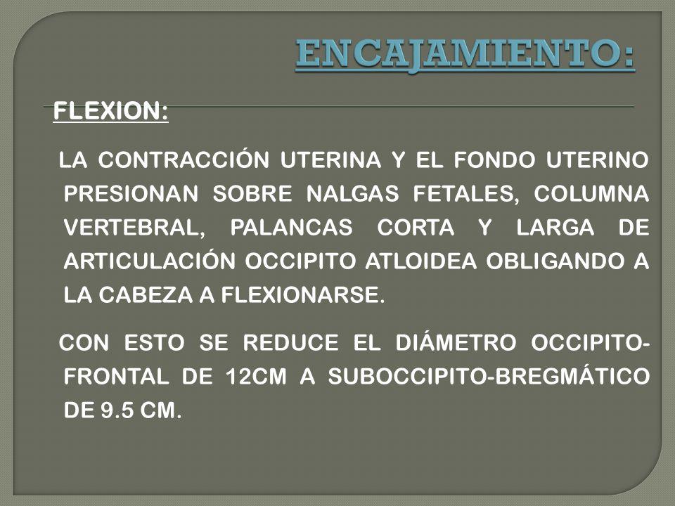 FLEXION: LA CONTRACCIÓN UTERINA Y EL FONDO UTERINO PRESIONAN SOBRE NALGAS FETALES, COLUMNA VERTEBRAL, PALANCAS CORTA Y LARGA DE ARTICULACIÓN OCCIPITO ATLOIDEA OBLIGANDO A LA CABEZA A FLEXIONARSE.