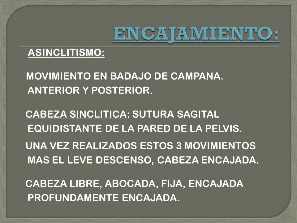 ASINCLITISMO: MOVIMIENTO EN BADAJO DE CAMPANA.ANTERIOR Y POSTERIOR.
