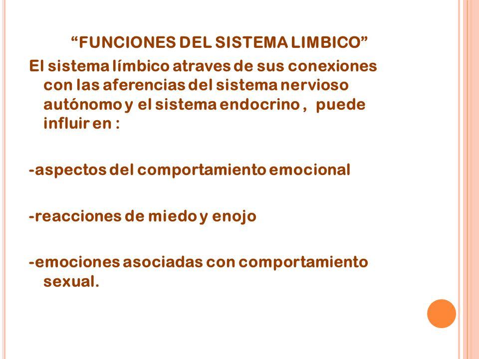 FUNCIONES DEL SISTEMA LIMBICO El sistema límbico atraves de sus conexiones con las aferencias del sistema nervioso autónomo y el sistema endocrino, puede influir en : -aspectos del comportamiento emocional -reacciones de miedo y enojo -emociones asociadas con comportamiento sexual.