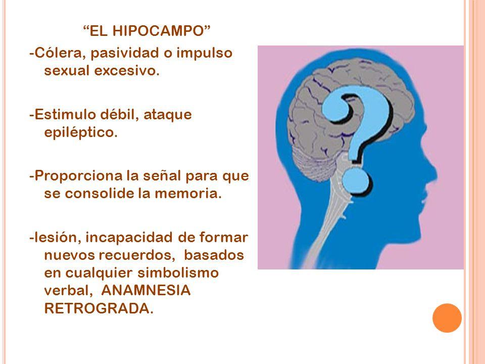 EL HIPOCAMPO -Cólera, pasividad o impulso sexual excesivo. -Estimulo débil, ataque epiléptico. -Proporciona la señal para que se consolide la memoria.