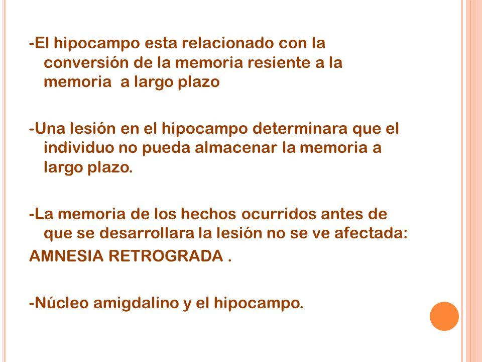 -El hipocampo esta relacionado con la conversión de la memoria resiente a la memoria a largo plazo -Una lesión en el hipocampo determinara que el individuo no pueda almacenar la memoria a largo plazo.