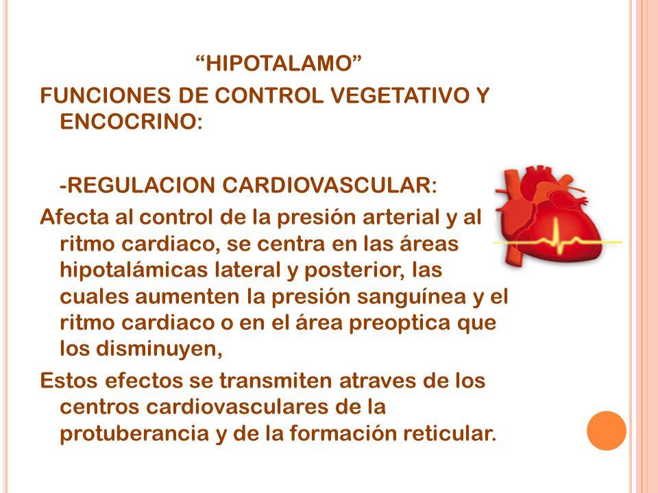 HIPOTALAMO FUNCIONES DE CONTROL VEGETATIVO Y ENCOCRINO: -REGULACION CARDIOVASCULAR: Afecta al control de la presión arterial y al ritmo cardiaco, se centra en las áreas hipotalámicas lateral y posterior, las cuales aumenten la presión sanguínea y el ritmo cardiaco o en el área preoptica que los disminuyen, Estos efectos se transmiten atraves de los centros cardiovasculares de la protuberancia y de la formación reticular.