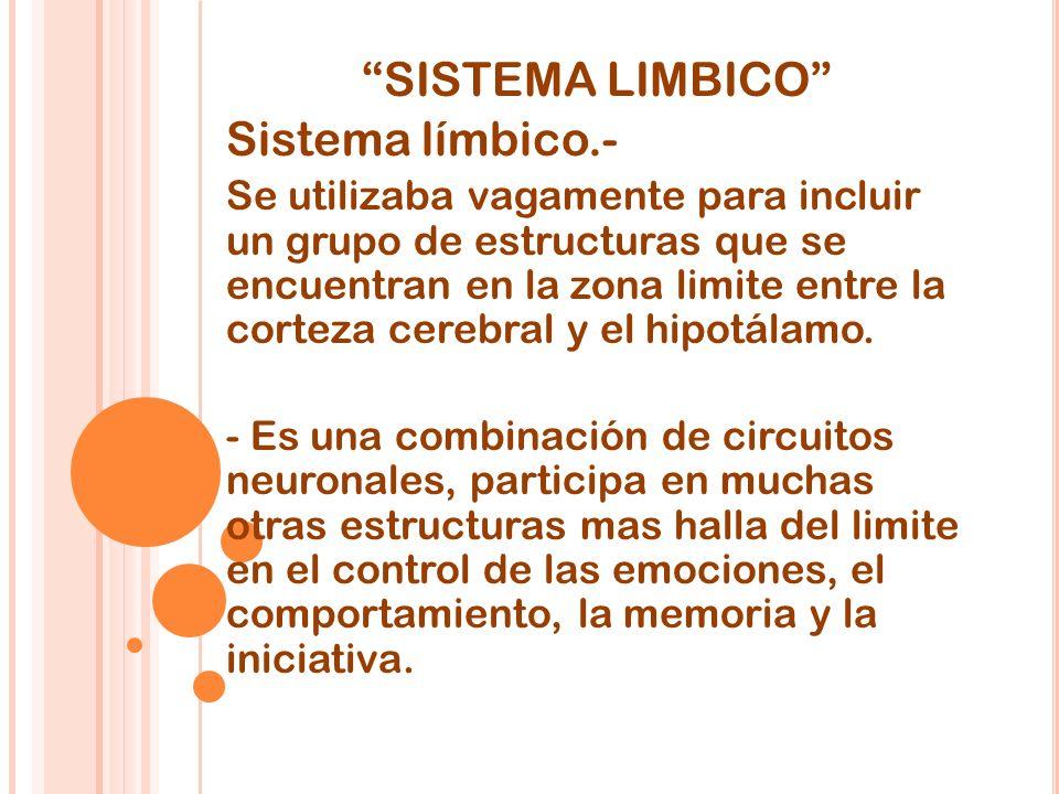 SISTEMA LIMBICO Sistema límbico.- Se utilizaba vagamente para incluir un grupo de estructuras que se encuentran en la zona limite entre la corteza cerebral y el hipotálamo.