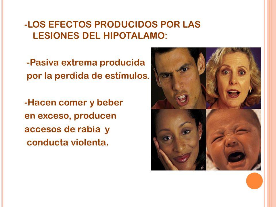 -LOS EFECTOS PRODUCIDOS POR LAS LESIONES DEL HIPOTALAMO: -Pasiva extrema producida por la perdida de estímulos. -Hacen comer y beber en exceso, produc