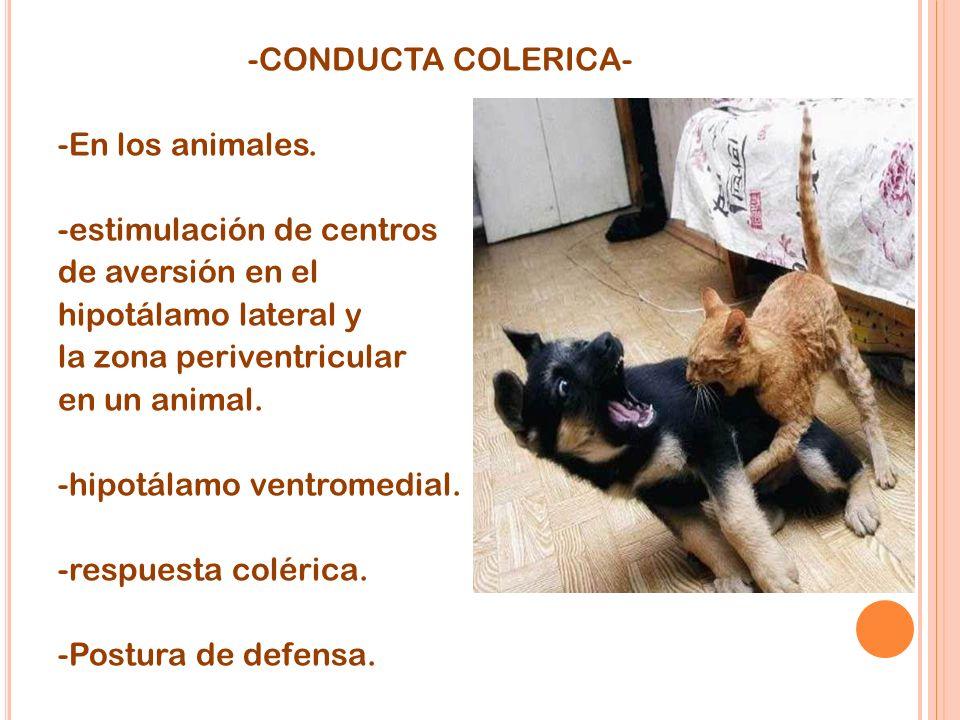 -CONDUCTA COLERICA- -En los animales. -estimulación de centros de aversión en el hipotálamo lateral y la zona periventricular en un animal. -hipotálam