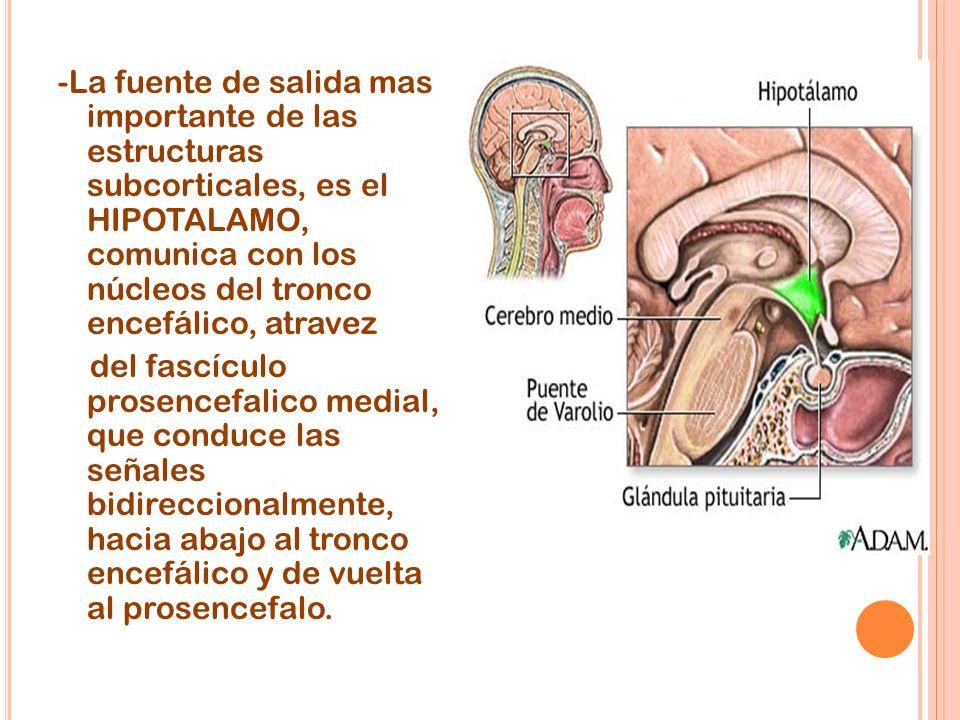-La fuente de salida mas importante de las estructuras subcorticales, es el HIPOTALAMO, comunica con los núcleos del tronco encefálico, atravez del fa