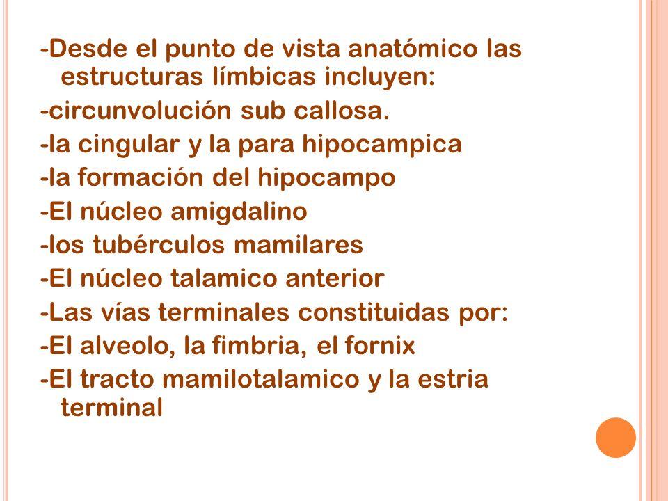 -Desde el punto de vista anatómico las estructuras límbicas incluyen: -circunvolución sub callosa. -la cingular y la para hipocampica -la formación de