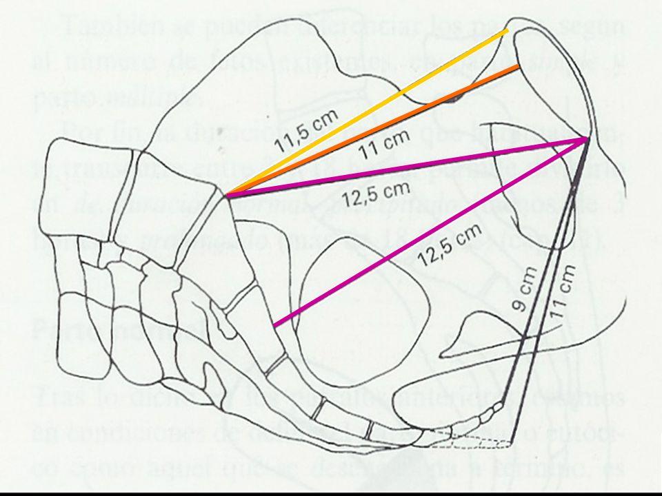 Transversos Transversos Transverso máximo o anatómico: puntos más distantes de ambas líneas innominadas (13.5cm) Transverso obstétrico: desde puntos equidistantes del pubis y promontorio (12cm)