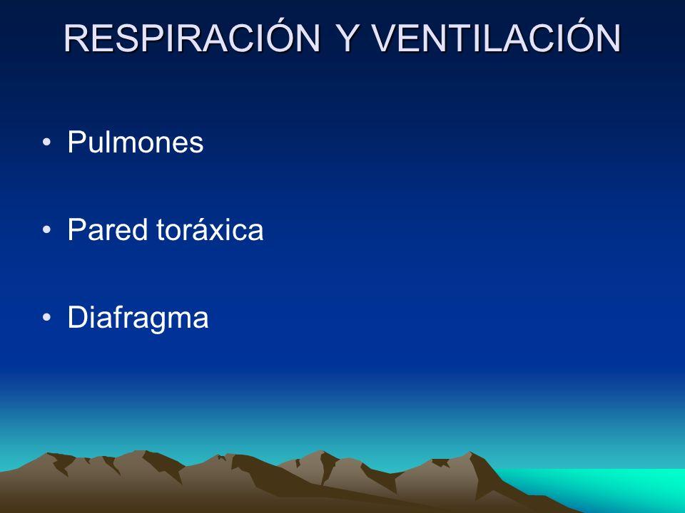 RESPIRACIÓN Y VENTILACIÓN Pulmones Pared toráxica Diafragma
