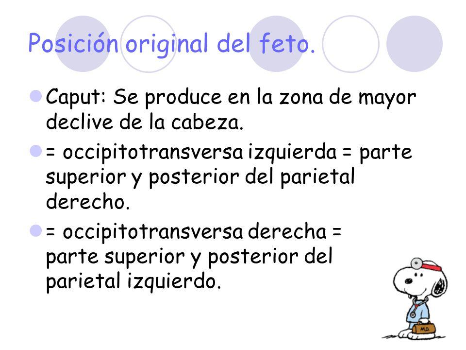 Posición original del feto. Caput: Se produce en la zona de mayor declive de la cabeza. = occipitotransversa izquierda = parte superior y posterior de