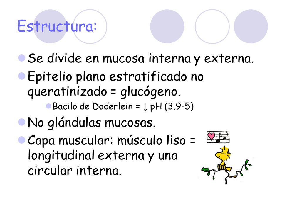 Estructura: Se divide en mucosa interna y externa. Epitelio plano estratificado no queratinizado = glucógeno. Bacilo de Doderlein = pH (3.9-5) No glán