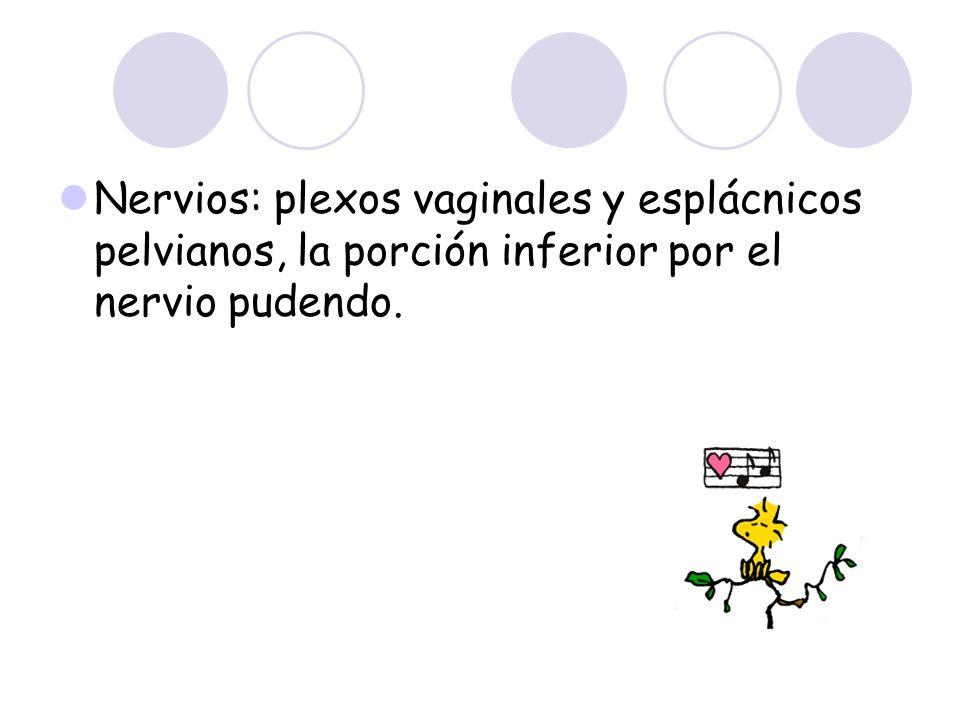 Nervios: plexos vaginales y esplácnicos pelvianos, la porción inferior por el nervio pudendo.