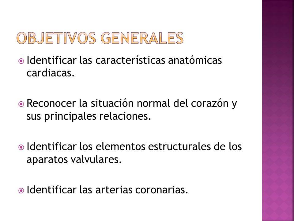 Identificar las características anatómicas cardiacas. Reconocer la situación normal del corazón y sus principales relaciones. Identificar los elemento