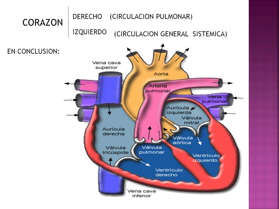 DERECHO IZQUIERDO (CIRCULACION PULMONAR) (CIRCULACION GENERAL SISTEMICA) EN CONCLUSION: CORAZON