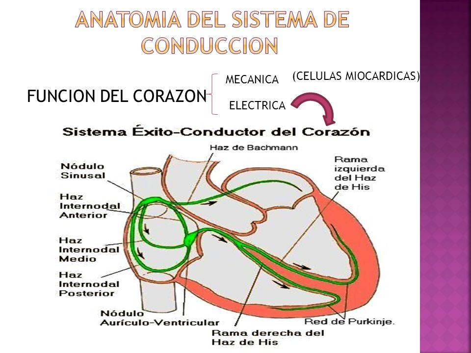 FUNCION DEL CORAZON MECANICA ELECTRICA (CELULAS MIOCARDICAS)