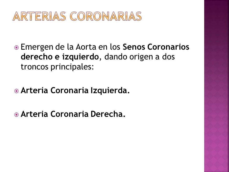 Emergen de la Aorta en los Senos Coronarios derecho e izquierdo, dando origen a dos troncos principales: Arteria Coronaria Izquierda. Arteria Coronari