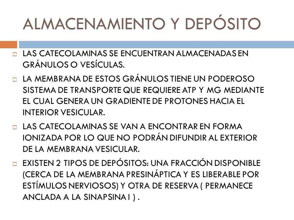 ALMACENAMIENTO Y DEPÓSITO LAS CATECOLAMINAS SE ENCUENTRAN ALMACENADAS EN GRÁNULOS O VESÍCULAS. LA MEMBRANA DE ESTOS GRÁNULOS TIENE UN PODEROSO SISTEMA