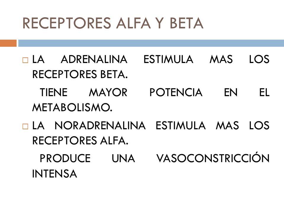 RECEPTORES ALFA Y BETA LA ADRENALINA ESTIMULA MAS LOS RECEPTORES BETA. TIENE MAYOR POTENCIA EN EL METABOLISMO. LA NORADRENALINA ESTIMULA MAS LOS RECEP