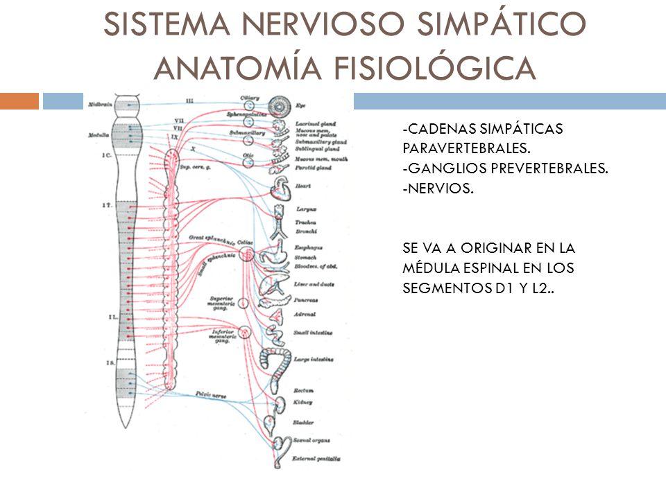 CONEXIONES NERVIOSAS -NEURONA PREGANGLIONAR. -NEURONA POSGANGLIONAR.