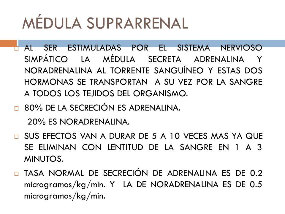 RECEPTORES ALFA Y BETA LA ADRENALINA ESTIMULA MAS LOS RECEPTORES BETA.