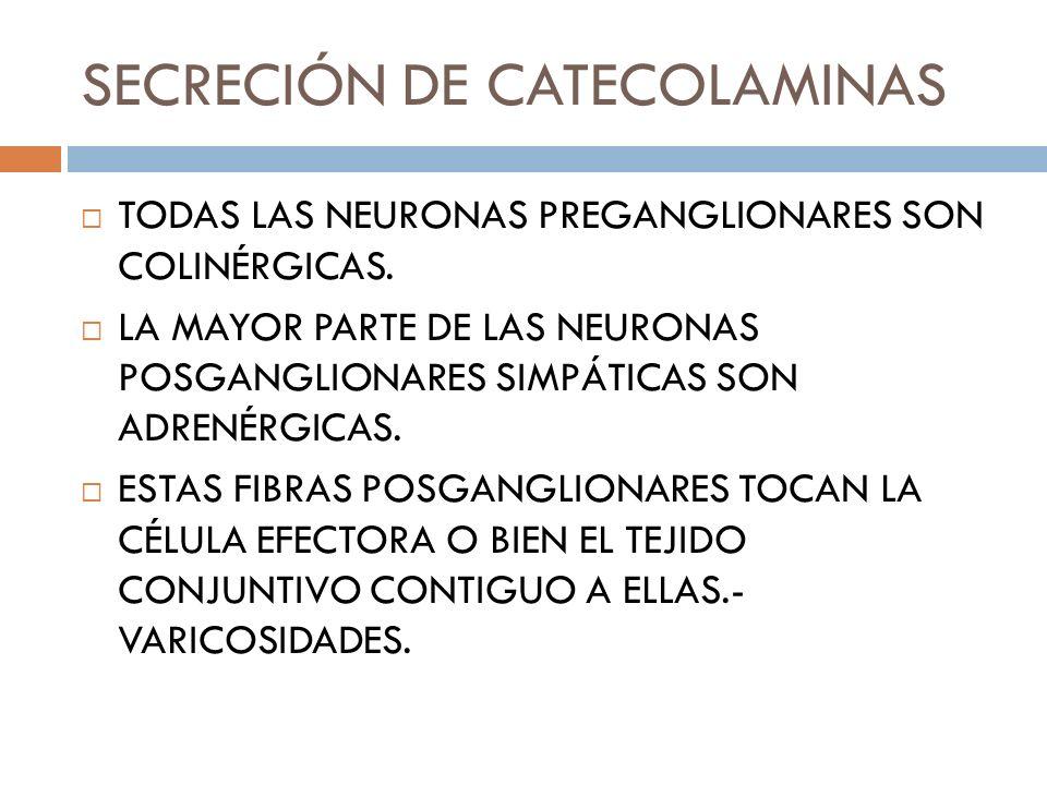 SECRECIÓN DE CATECOLAMINAS TODAS LAS NEURONAS PREGANGLIONARES SON COLINÉRGICAS. LA MAYOR PARTE DE LAS NEURONAS POSGANGLIONARES SIMPÁTICAS SON ADRENÉRG