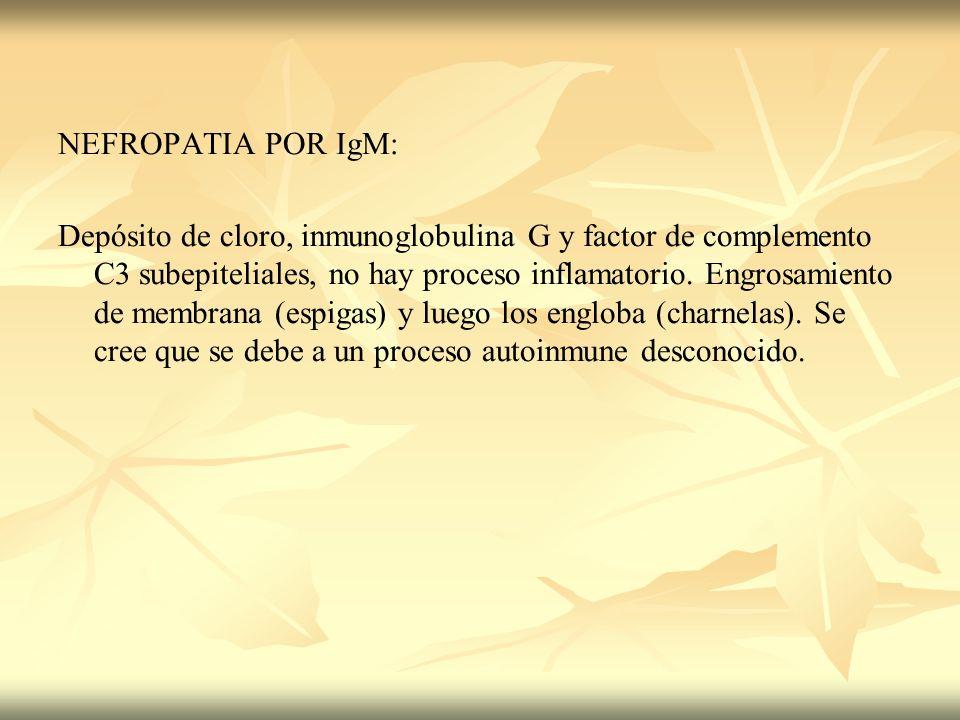 NEFROPATIA POR IgM: Depósito de cloro, inmunoglobulina G y factor de complemento C3 subepiteliales, no hay proceso inflamatorio. Engrosamiento de memb