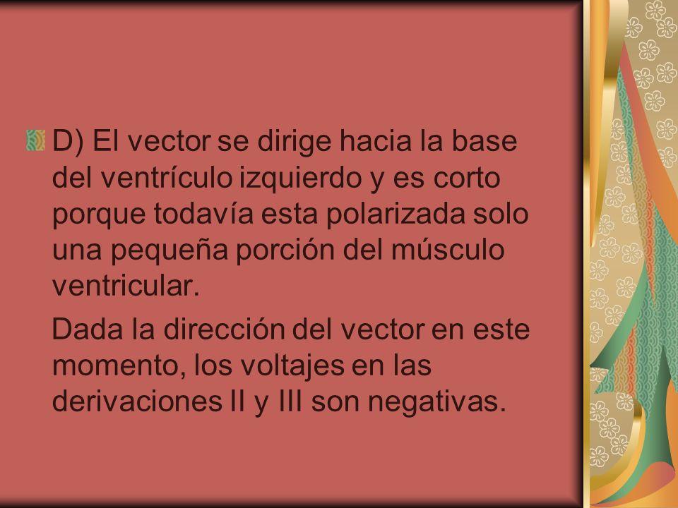D) El vector se dirige hacia la base del ventrículo izquierdo y es corto porque todavía esta polarizada solo una pequeña porción del músculo ventricul