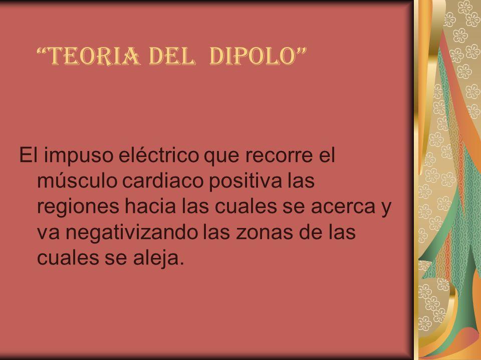 TEORIA DEL DIPOLO El impuso eléctrico que recorre el músculo cardiaco positiva las regiones hacia las cuales se acerca y va negativizando las zonas de