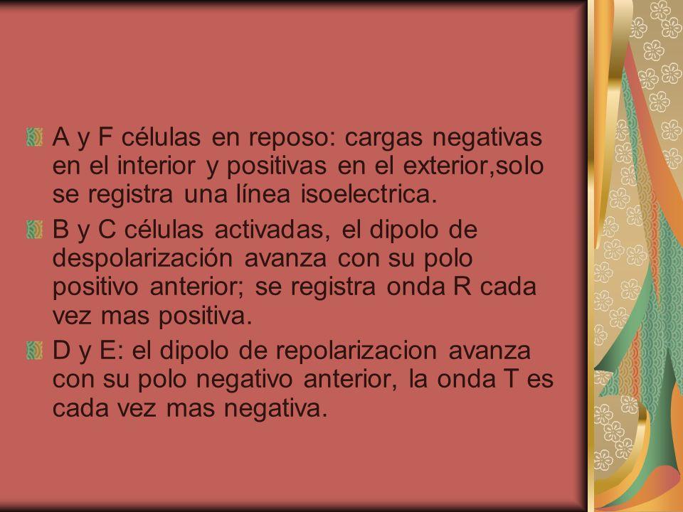 A y F células en reposo: cargas negativas en el interior y positivas en el exterior,solo se registra una línea isoelectrica. B y C células activadas,
