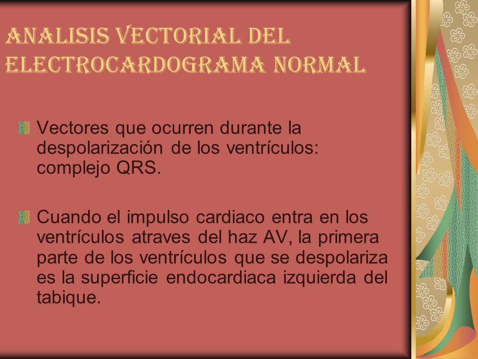 ANALISIS VECTORIAL DEL ELECTROCARDOGRAMA NORMAL Vectores que ocurren durante la despolarización de los ventrículos: complejo QRS. Cuando el impulso ca