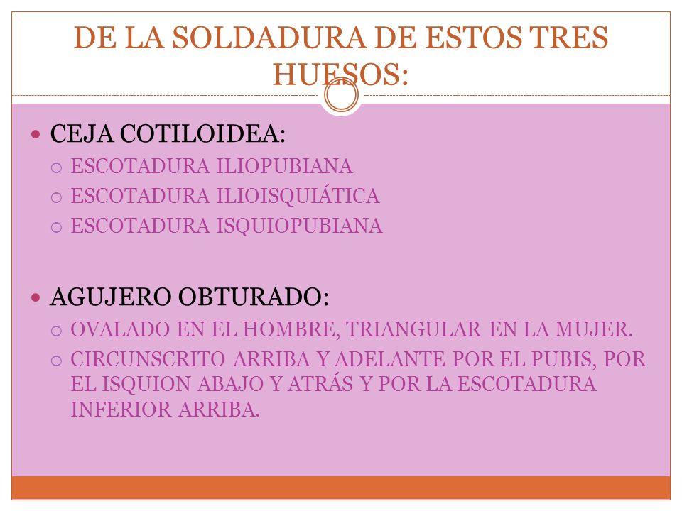 DE LA SOLDADURA DE ESTOS TRES HUESOS: CEJA COTILOIDEA: ESCOTADURA ILIOPUBIANA ESCOTADURA ILIOISQUIÁTICA ESCOTADURA ISQUIOPUBIANA AGUJERO OBTURADO: OVA