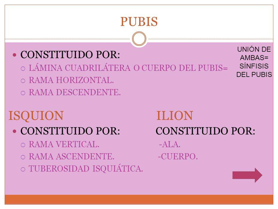 PUBIS CONSTITUIDO POR: LÁMINA CUADRILÁTERA O CUERPO DEL PUBIS= RAMA HORIZONTAL. RAMA DESCENDENTE. CONSTITUIDO POR: CONSTITUIDO POR: RAMA VERTICAL. -AL