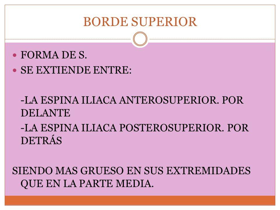 BORDE SUPERIOR FORMA DE S. SE EXTIENDE ENTRE: -LA ESPINA ILIACA ANTEROSUPERIOR. POR DELANTE -LA ESPINA ILIACA POSTEROSUPERIOR. POR DETRÁS SIENDO MAS G
