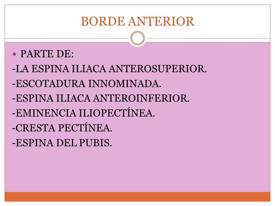 BORDE ANTERIOR PARTE DE: -LA ESPINA ILIACA ANTEROSUPERIOR. -ESCOTADURA INNOMINADA. -ESPINA ILIACA ANTEROINFERIOR. -EMINENCIA ILIOPECTÍNEA. -CRESTA PEC