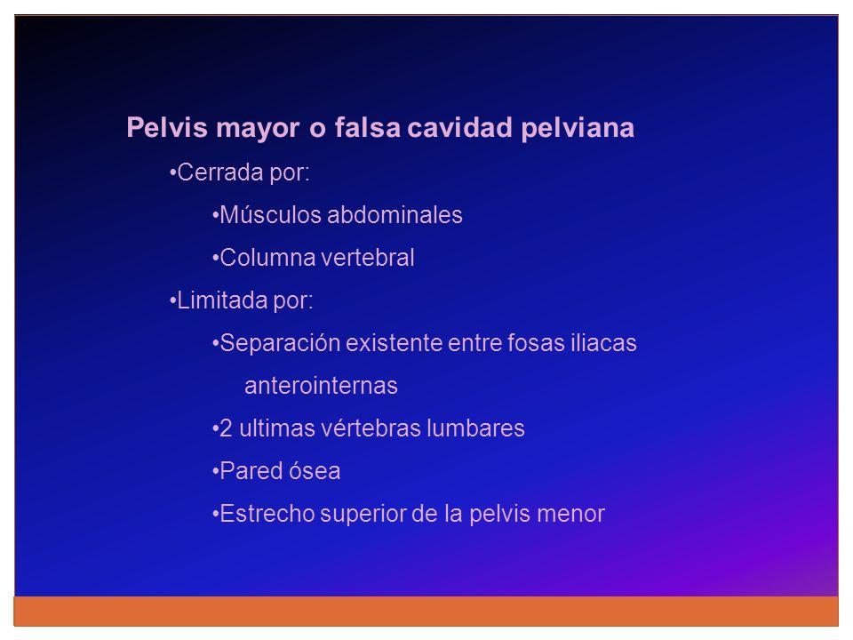 Pelvis mayor o falsa cavidad pelviana Cerrada por: Músculos abdominales Columna vertebral Limitada por: Separación existente entre fosas iliacas anter
