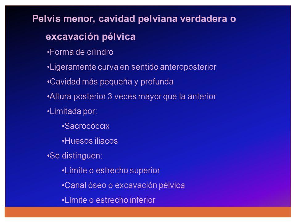 Pelvis menor, cavidad pelviana verdadera o excavación pélvica Forma de cilindro Ligeramente curva en sentido anteroposterior Cavidad más pequeña y pro